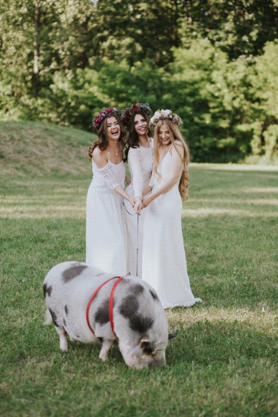 świnia na sesji ślubnej 1